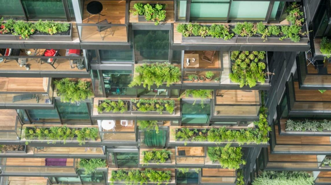 Rewilding our cities: beauty, biodiversity and the biophilic cities movement